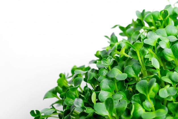 Microgreen orgânico crescente em uma caixa transparente em mármore cinza claro. vista do topo.