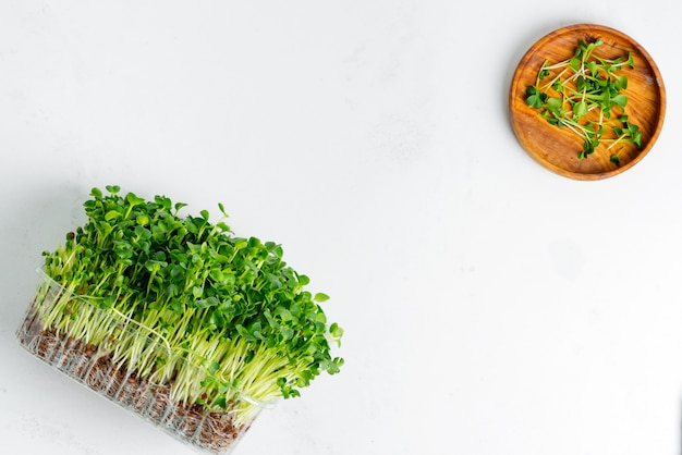 Microgreen orgânico cultivado em casa fresco em uma caixa transparente em uma luz - fundo concreto cinzento.