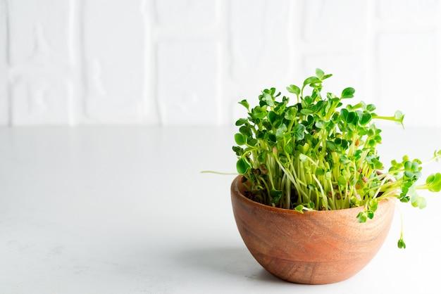 Microgreen orgânico fresco cultivado em casa em uma bacia de madeira em uma luz - fundo cinzento. vista de perto.