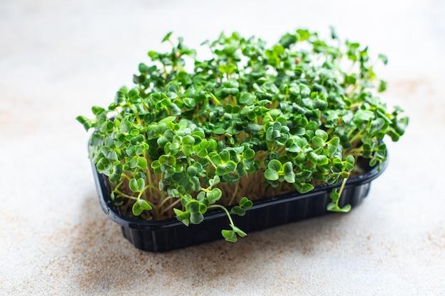 Microgreen rabanete ervas frescas para salada e lanche para cozinhar