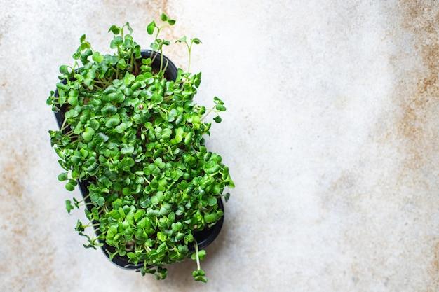 Microgreen salada crua comendo mostarda ervas manjericão rabanete fresco cozinhar lanche