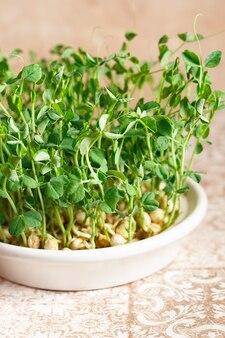 Microgreens de ervilhas com sementes e raízes.