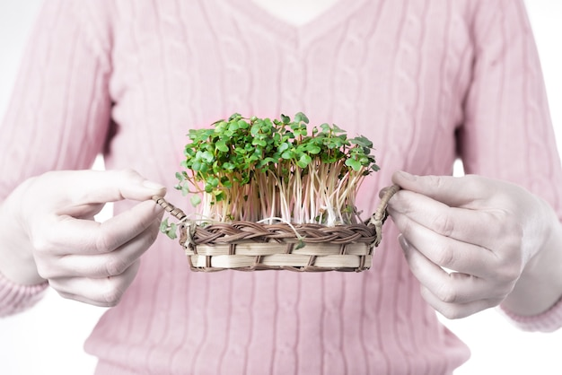 Microgreens de rabanete verde cultivado em uma cesta em mãos femininas