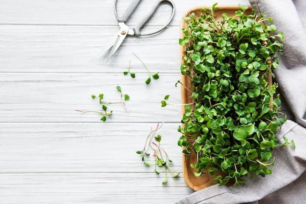 Microgreens de rabanete vermelho em uma mesa de madeira branca, conceito saudável