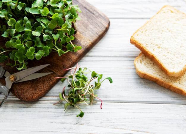 Microgreens de rabanete vermelho em uma tábua de madeira e pão, conceito saudável