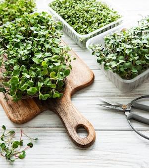 Microgreens de rabanete vermelho em uma tábua de madeira