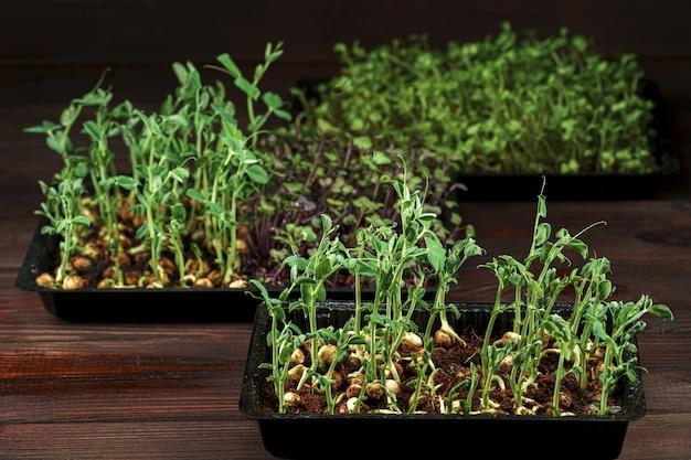 Microgreens misturados em caixa na mesa de madeira