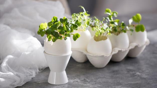 Microgreens nas cascas de ovos, conceito de páscoa, ovos de páscoa