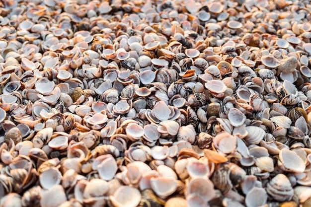 Milhares de conchas vazias de moluscos, fundo de concha completo para usar como papel de parede.