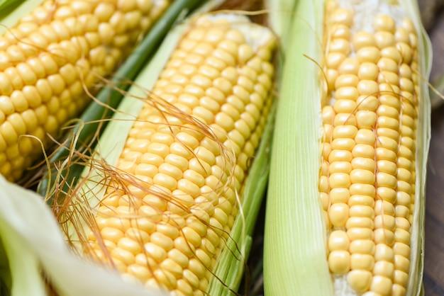 Milho em espigas e espigas de milho