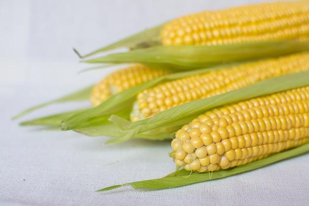 Milho. espigas de milho doce maduro em folhas numa toalha de mesa leve.