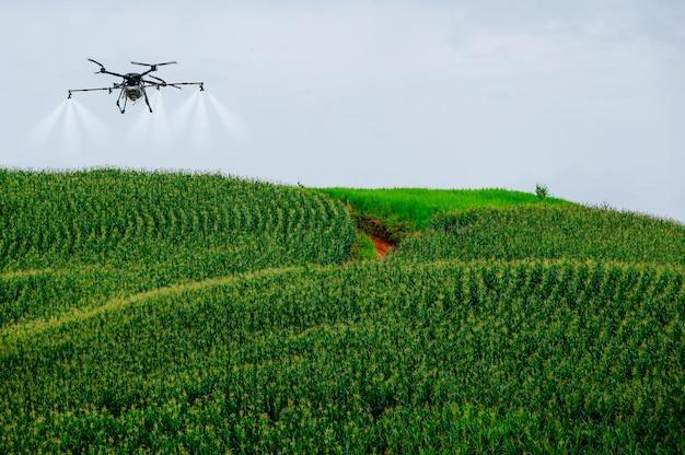Milho no campo de milho na montanha com drone agrícola