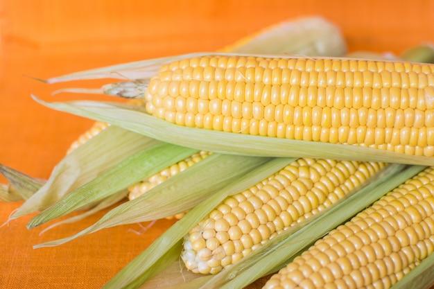 Milho. orelhas de milho doce maduro em folhas