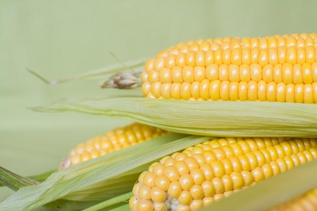 Milho. orelhas de milho doce maduro nas folhas em um fundo cinza.