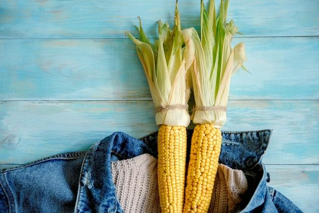 Milho recém colhido em um fundo azul de madeira, suéter aconchegante de tricô