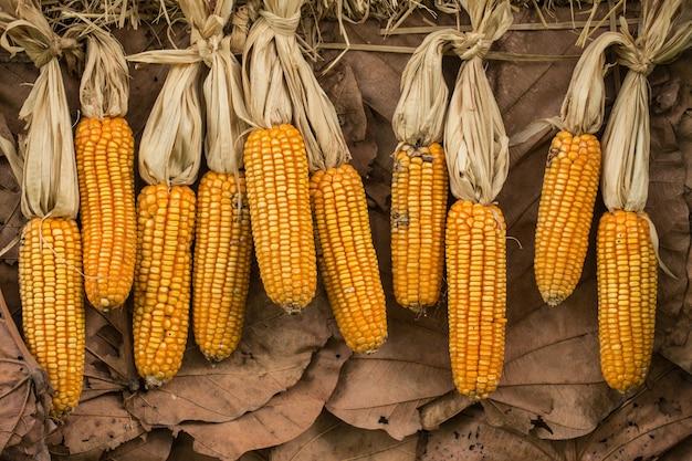 Milho seco ou milho. reserva de alimentos secos