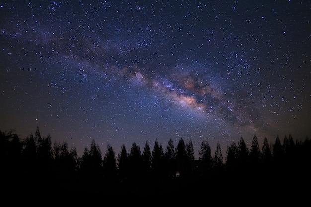 Milkyway e silhueta bonita do pinheiro em um céu noturno antes do nascer do sol
