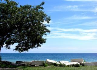 Milwaukee árvore à beira-mar,