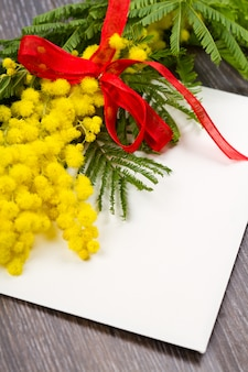 Mimosa, dia das mulheres