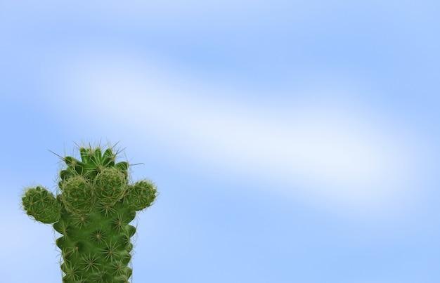 Mini cacto verde contra o céu azul brilhante