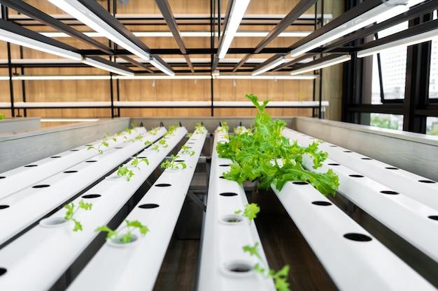 Mini fazenda para o cultivo de saladas.