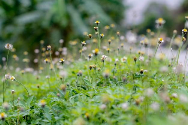 Mini flor e grama na natureza