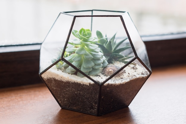 Mini jardim suculento em terrário de vidro sobre peitoril de janela de madeira, suculentas com areia e pedras em caixa de vidro, elementos de decoração para casa.
