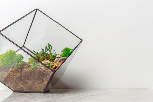 Mini jardim suculento em vidro florarium