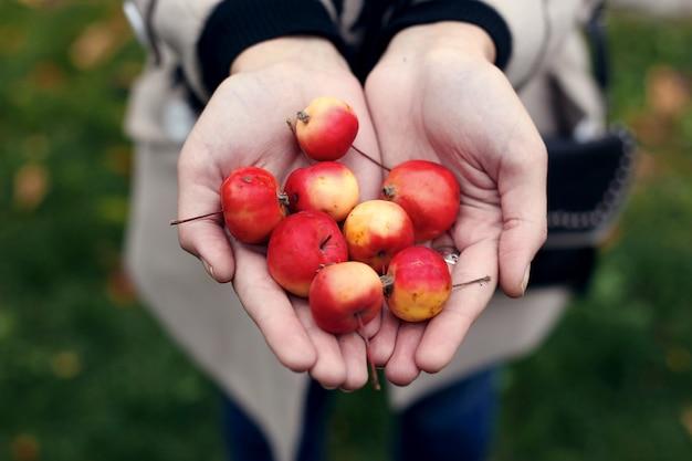 Mini maçãs selvagens nas mãos de uma menina.