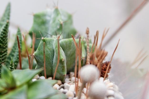 Mini plantas suculentas em um terrário de vidro