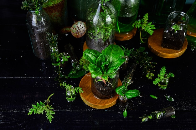 Mini vasos de vidro e garrafa com folhas verdes, plantas. jardinagem.