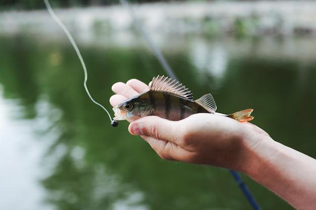 Minúsculo peixe fresco apanhado na mão contra o lago