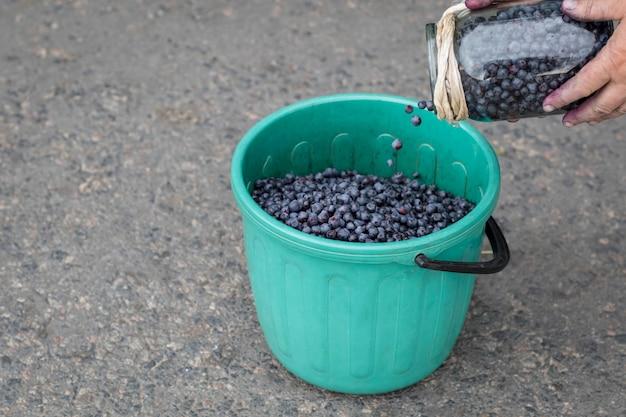 Mirtilos maduros em um balde na estrada.