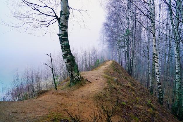 Misteriosa paisagem enevoada de dezembro na floresta.