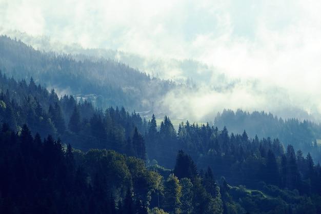 Mística floresta nevoenta nas montanhas da áustria