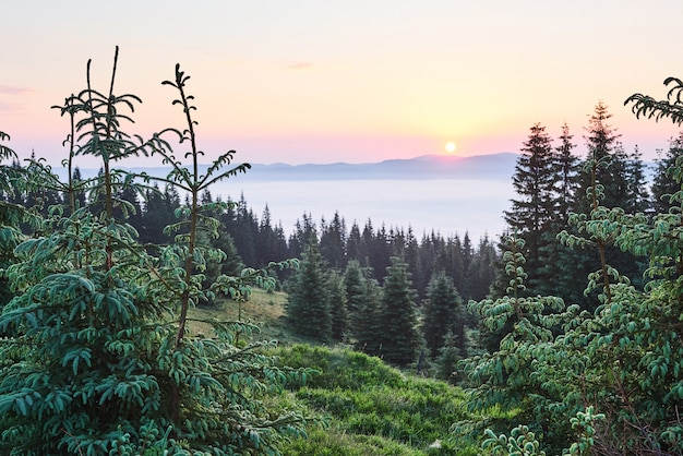 Misty paisagem montanhosa dos cárpatos com floresta de abetos, as copas das árvores saindo da névoa.