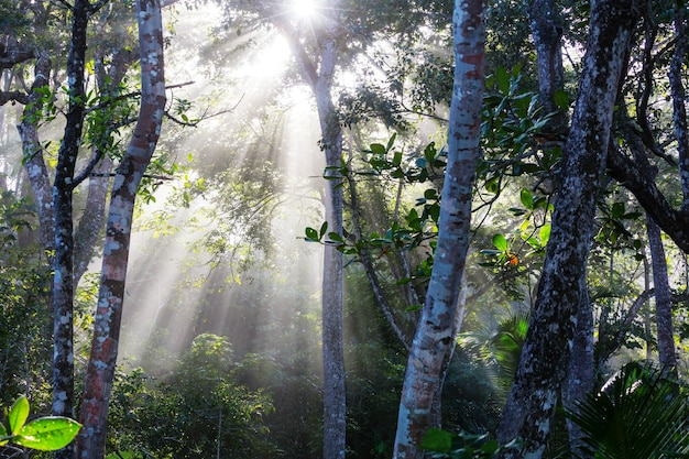 Misty rainforest na costa rica, américa central