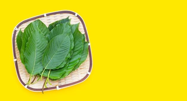 Mitragyna speciosa, folhas frescas de kratom na cesta de bambu em fundo amarelo.