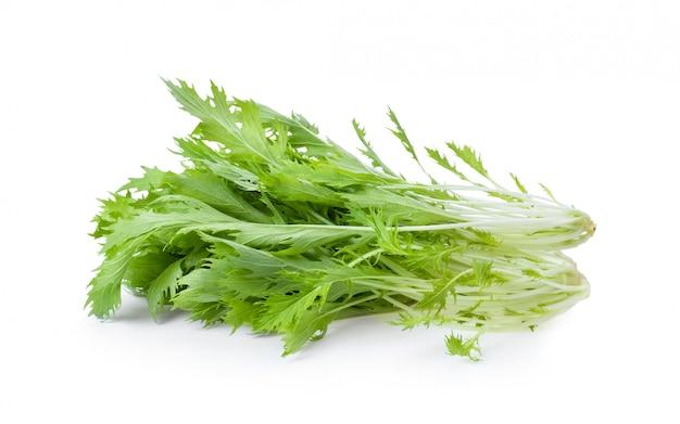 Mizuna alface isolado mostarda japonesa, salada de legumes para uma boa saúde em branco