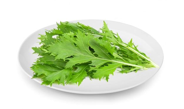 Mizuna alface isolado mostarda japonesa, salada de legumes para uma boa saúde no prato isolado na superfície branca