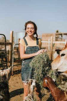 Moça alegre que alimenta cabras e uma vaca