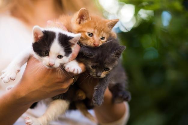 Moça que mantem gatinhos bonitos exteriores