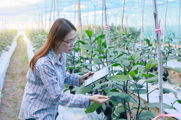Moça que verifica beringelas da qualidade pela tabuleta. conceito de agricultura e produção de alimentos.