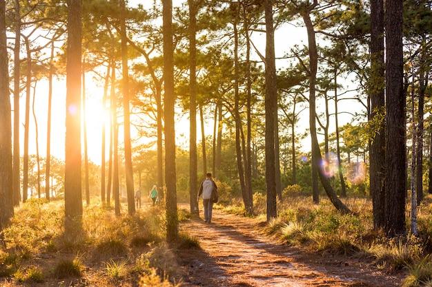 Mochilas de pessoas caminhando pela floresta durante o pôr do sol.