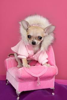 Moda chihuahua cão barbie estilo rosa poltrona