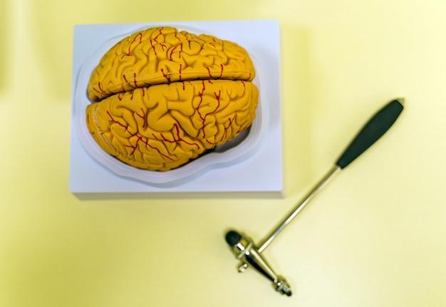 Modelo de cérebro humano para educação em laboratório. conceito de neurocirurgia.
