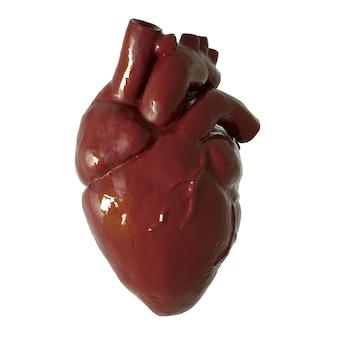 Modelo de coração 3d