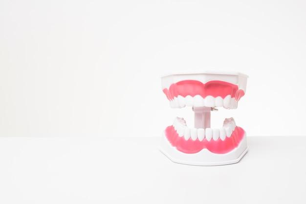 Modelo de dentes artificiais na mesa branca