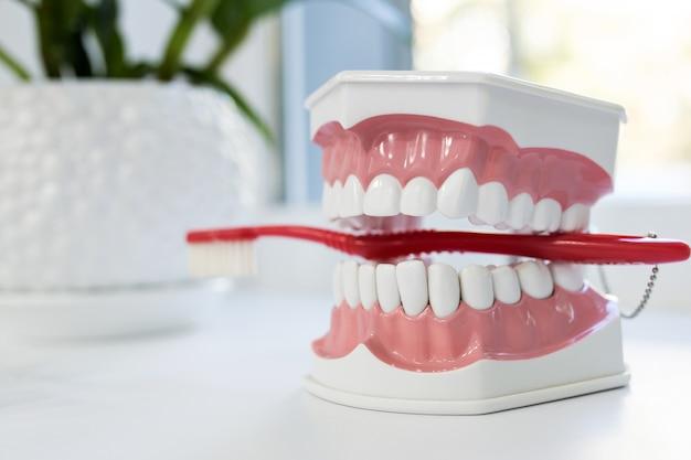 Modelo de mandíbula com escova de dentes vermelha na mesa branca close-up