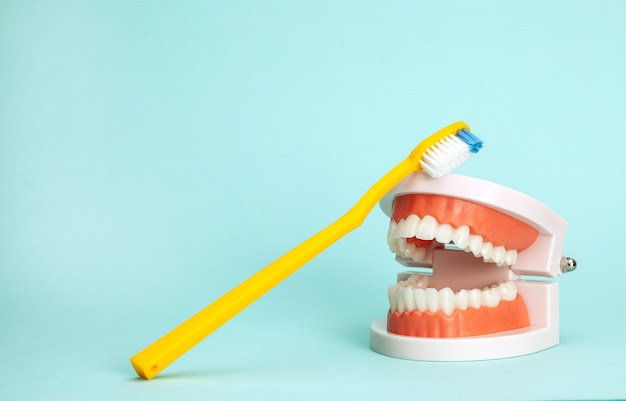 Modelo de mandíbula e escovas de dente, exceto sobre como escovar os dentes corretamente ou como escolher a escova de dente